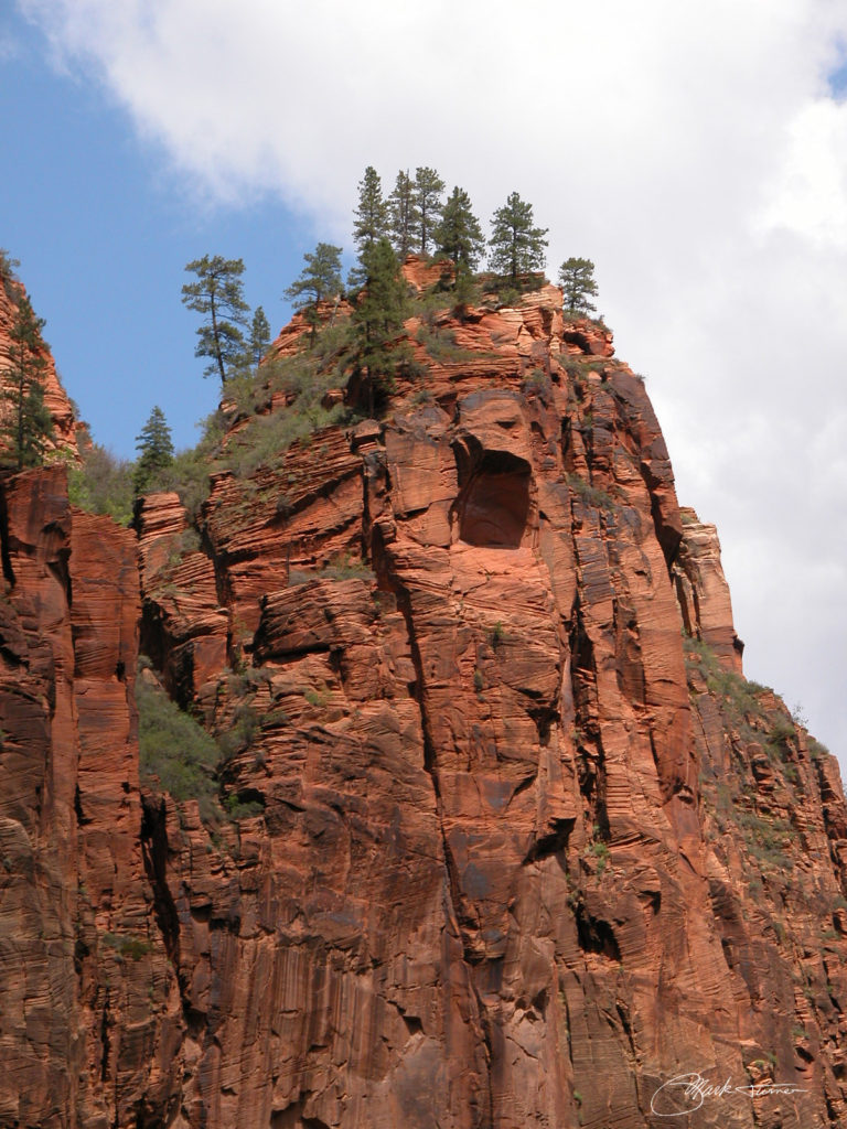 pine trees growing on a high peak of red rock in Zion National Park, photo by Mark R. Turner 2004